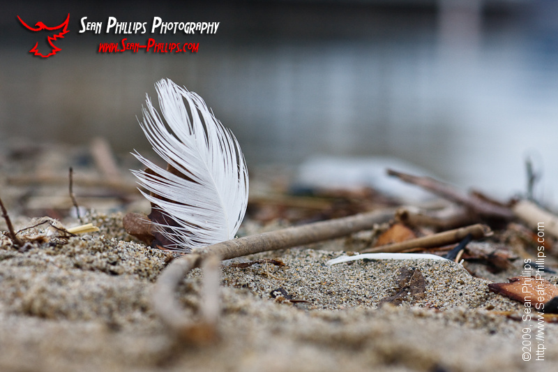 Closeup on a White Feather on a Sandy Beach