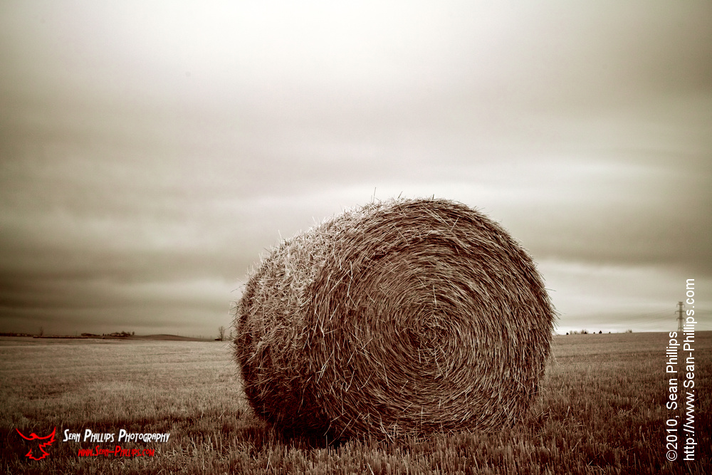 Round Bale in a Field