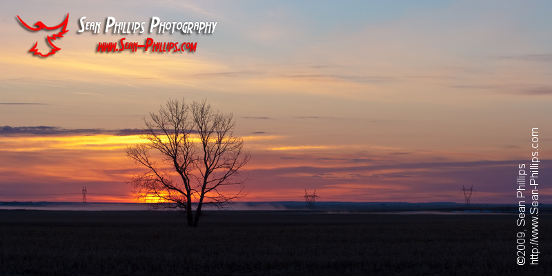Panoramic Silhouette of a Solitary Tree against the Sunrise