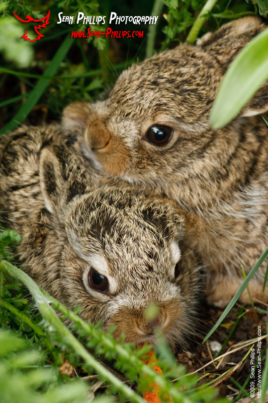 Baby bunnies in the flowerbed