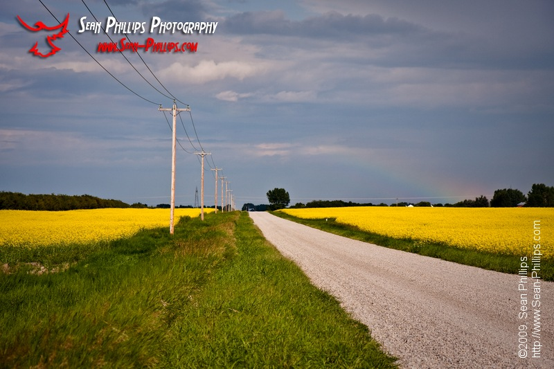 Prairie Road splitting Fields of Canola
