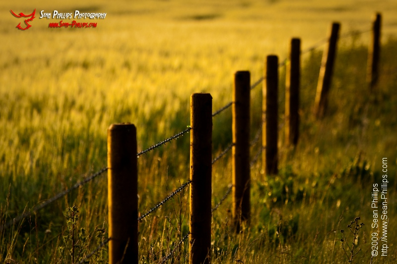 Prairie Fence at Sunrise