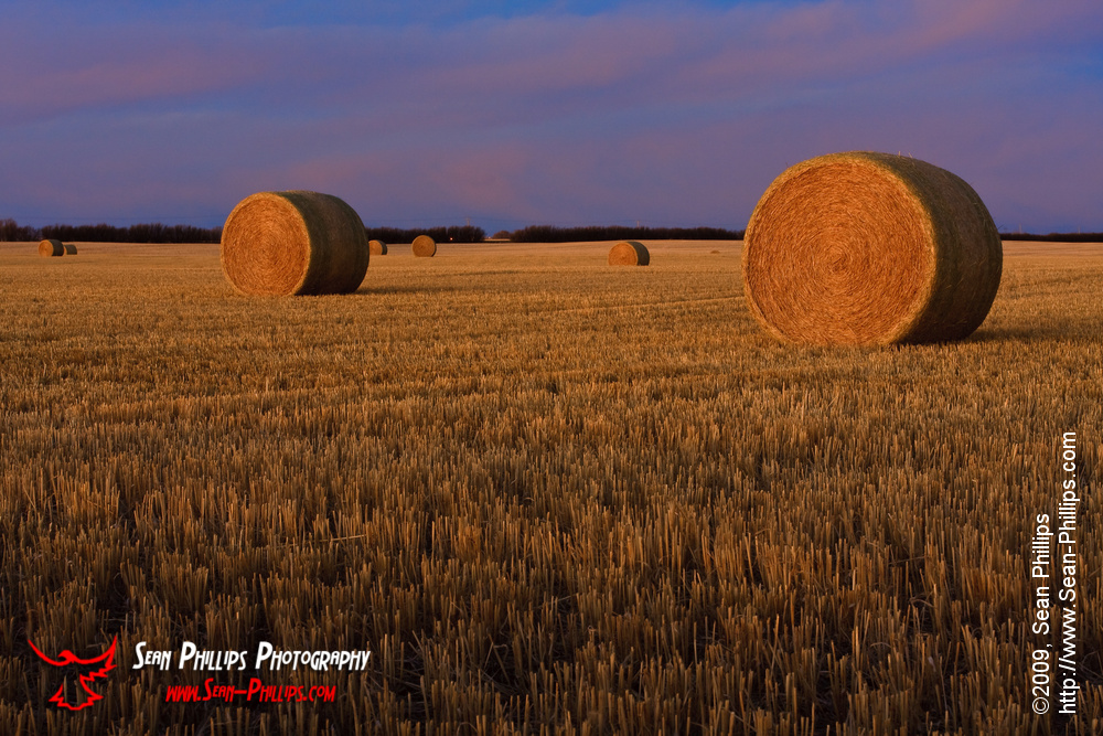 Round Bales in Morning Light
