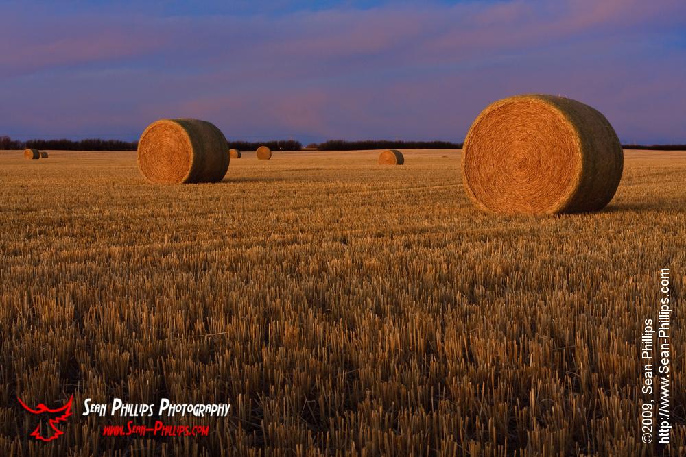 Round Bales in Morning Light