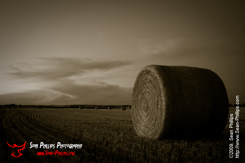 Bales in Black and White